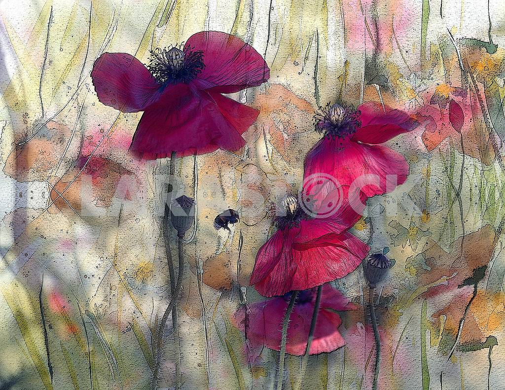 Scarlet poppies, poppy boxes, a flying bee. Treatment under a water color — Image 64162
