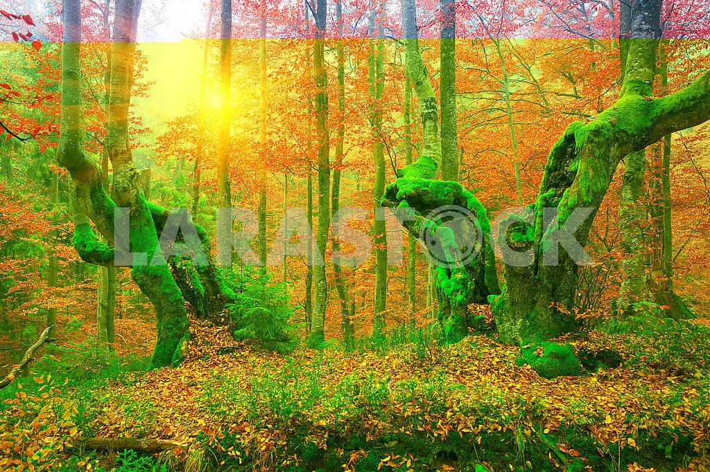Beech forest in autumn — Image 64203