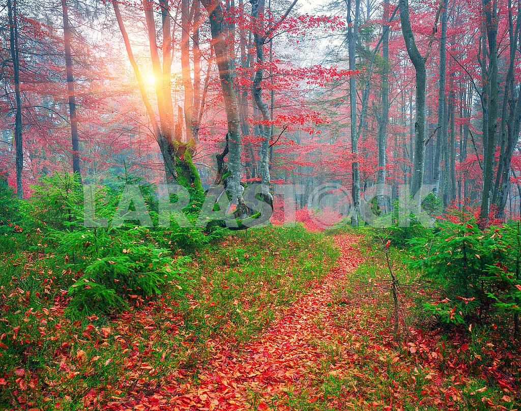 Beech forest in autumn — Image 64254