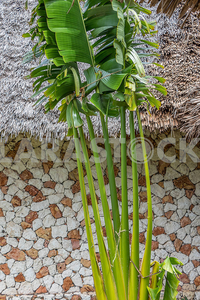 Wall and palm tree in Zanzibar — Image 64330