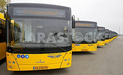 New passenger buses MAZ