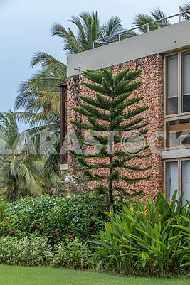 Деревья возле гостиницы