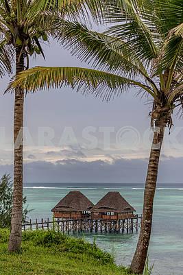 Пальмы на берегу океана