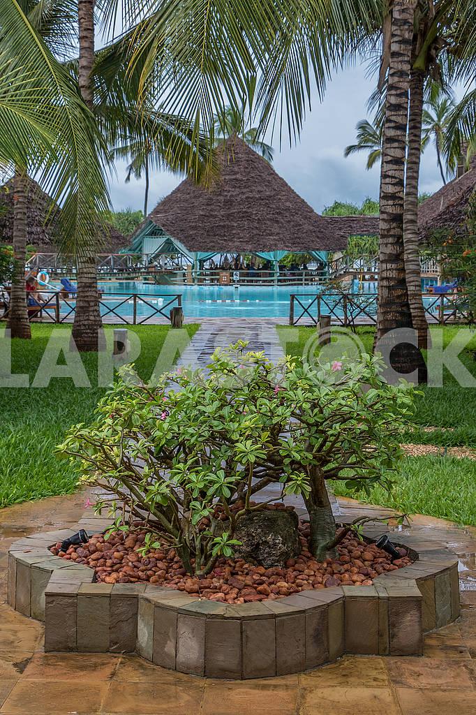 Кусты возле гостиницы на Занзибаре — Изображение 64619