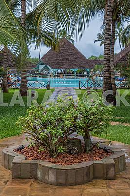 Bushes near the hotel in Zanzibar
