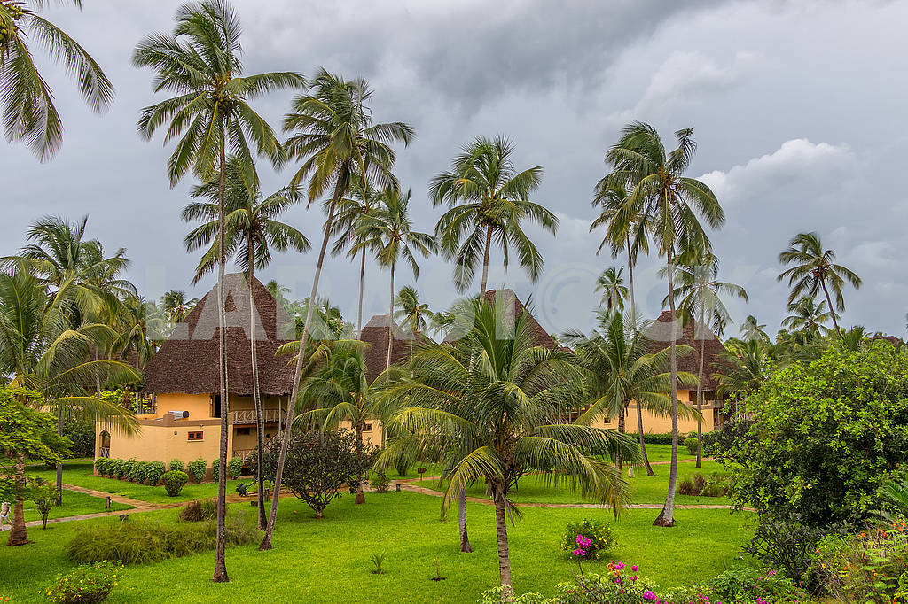 Palm trees near the hotel in Zanzibar — Image 64622