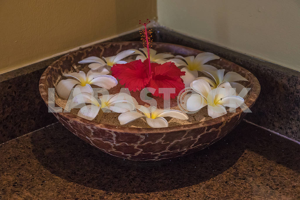 Lilies in the lobby of a hotel in Zanzibar — Image 64642