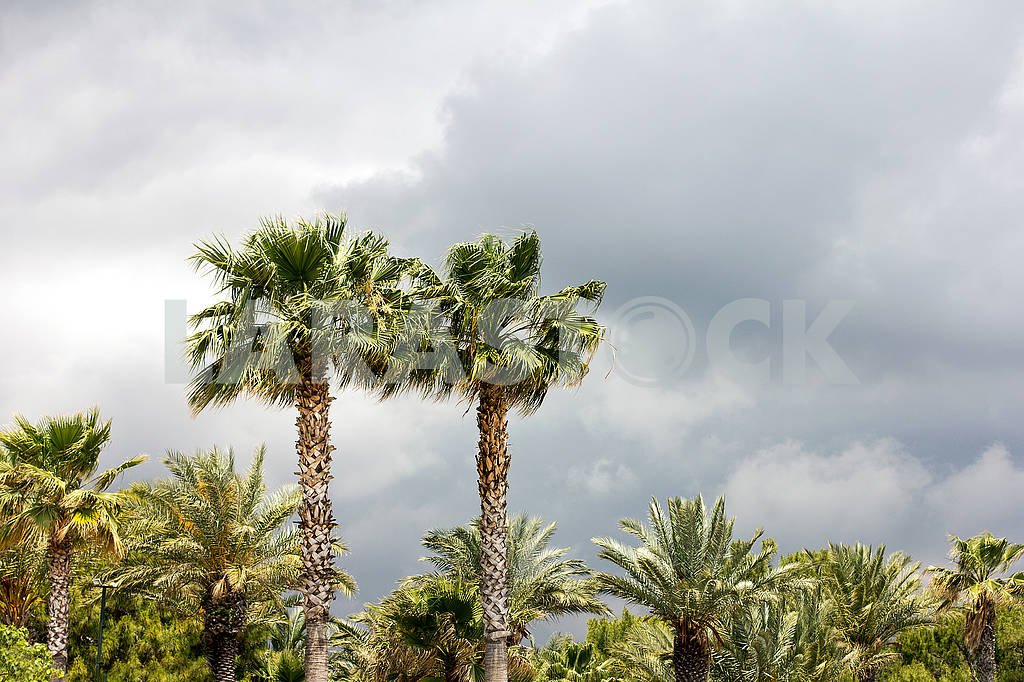 Palm grove before the rain — Image 64661