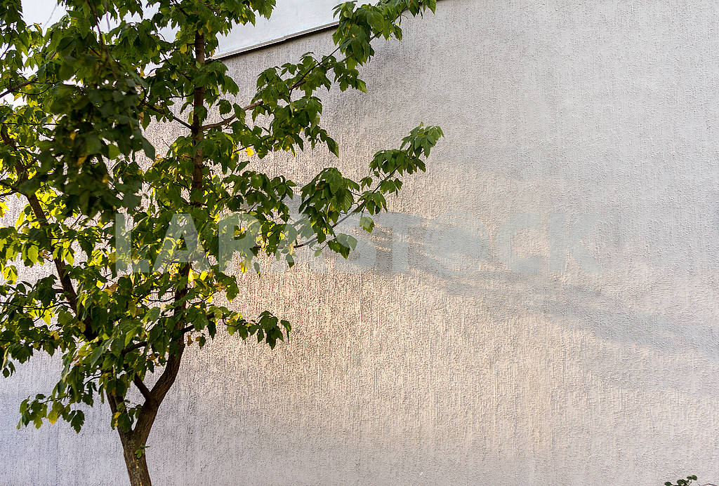 Shadow of an autumn tree on a concrete wall — Image 64662