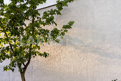 Shadow of an autumn tree on a concrete wall