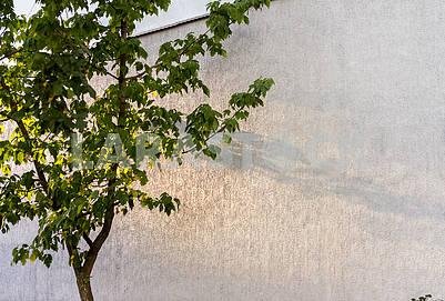Тень осеннего дерева на бетонной стене