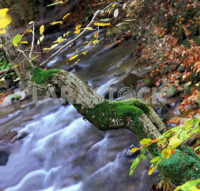 Ручей и дерево как русалка