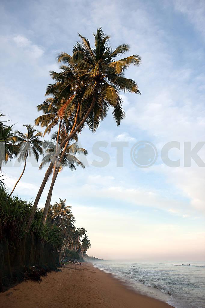 Nature on the island of Sri Lanka — Image 64685