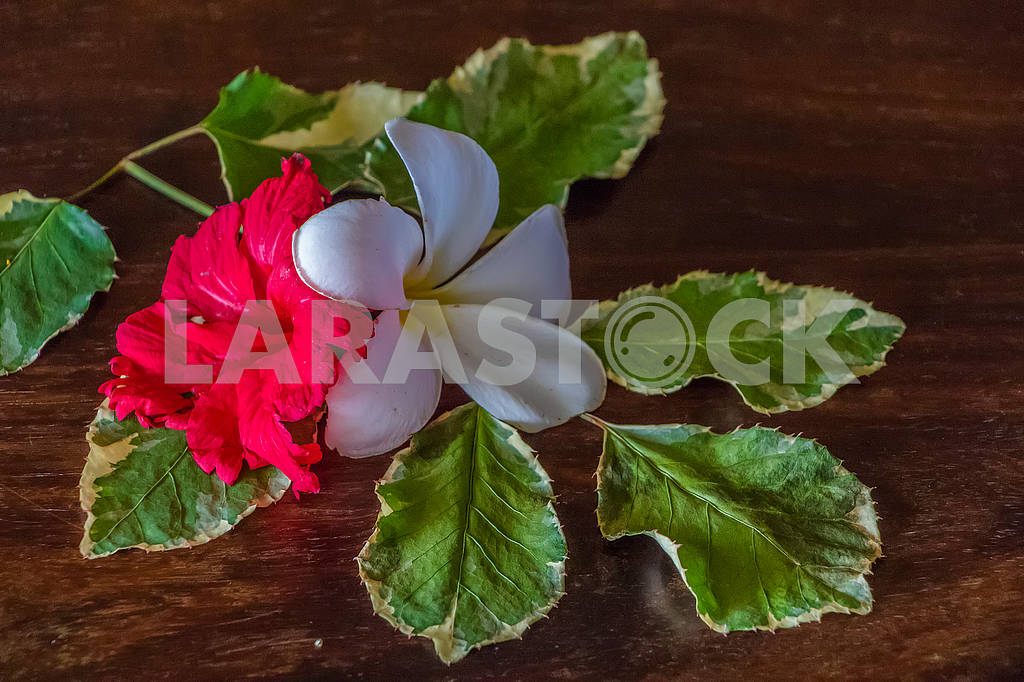 Flower on the table — Image 65168