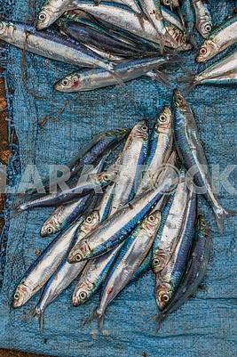 Рыба на мешковине