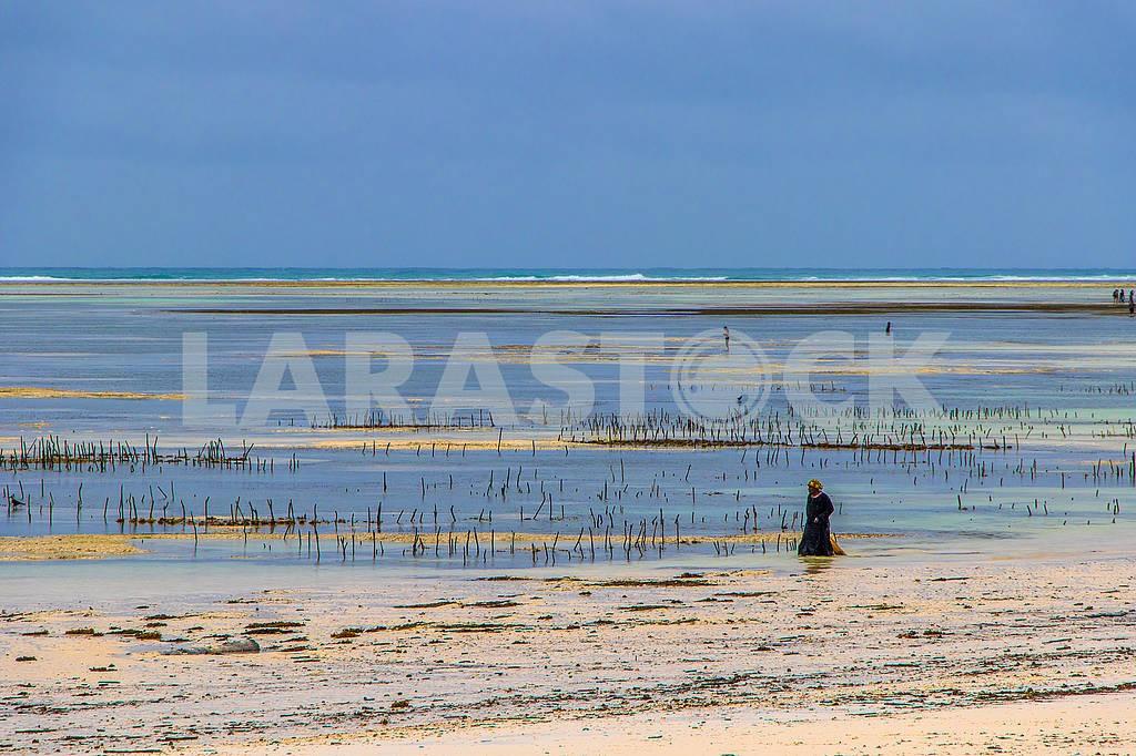 Сборщики морских водорослей — Изображение 65200