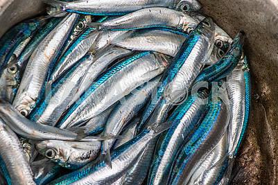 Рыба на базаре