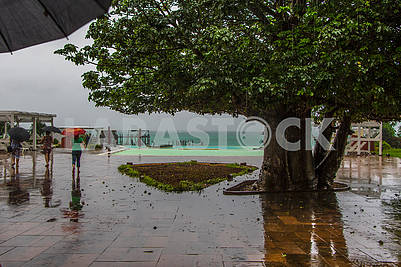 Tree and people under umbrellas