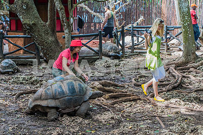 Woman and giant tortoise
