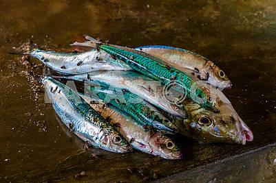 Мухи на рыбе занзибарских рыбаков
