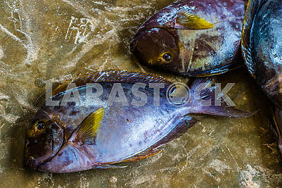 Catch of Zanzibar fishers