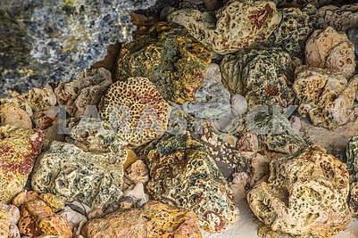 Large stones in Zanzibar