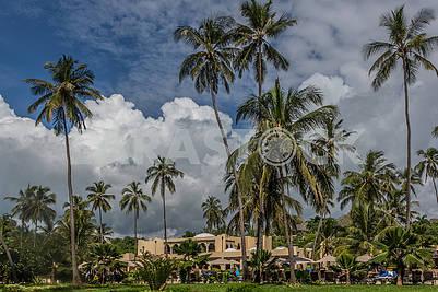 Palms in front of the hotel in Zanzibar