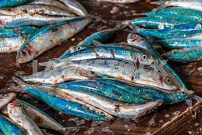 Свежевыловленная рыба