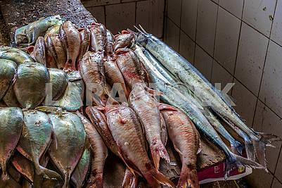Fish series on the market