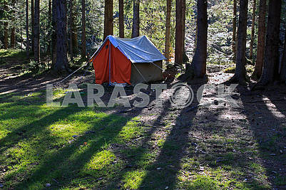 Tent in the coniferous forest