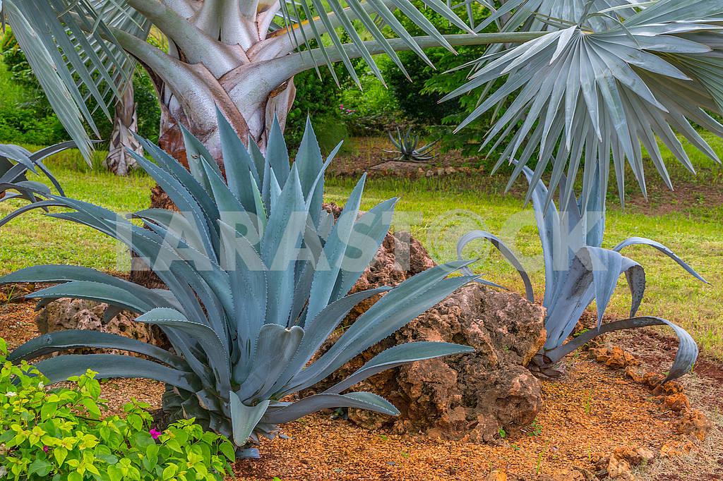 Алоэ и пальма  — Изображение 65649