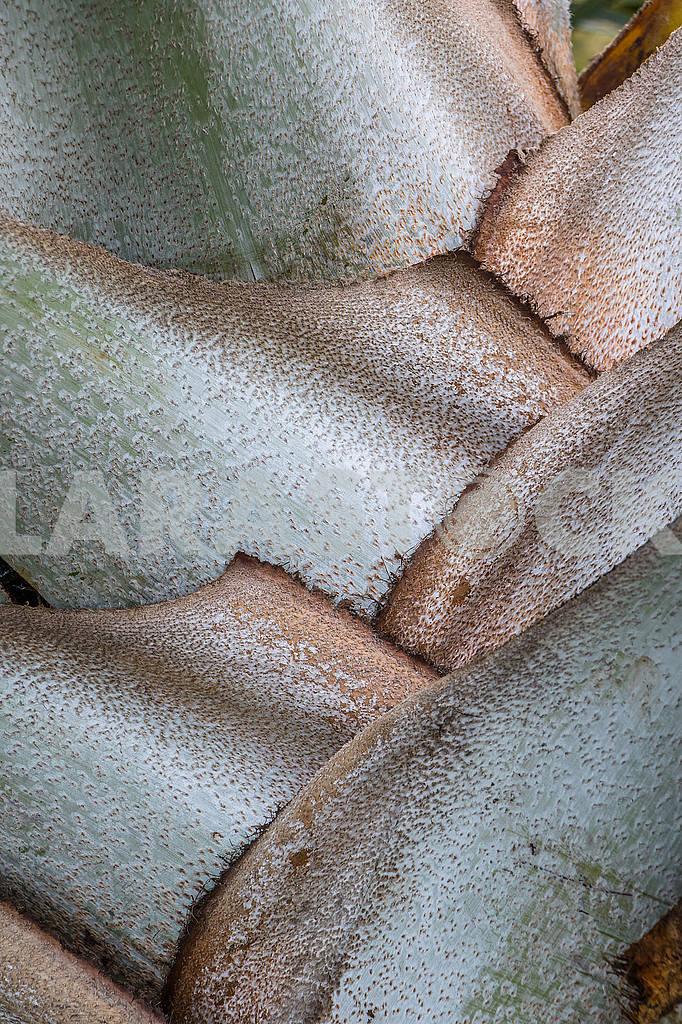 Переплетенные листья пальмы на Занзибаре, Танзания  — Изображение 65737