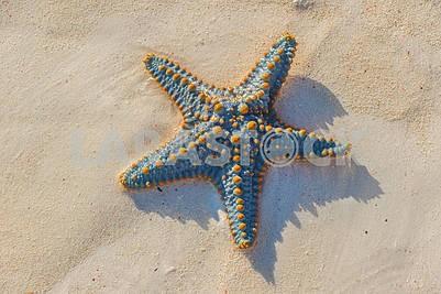 Морская звезда берегу