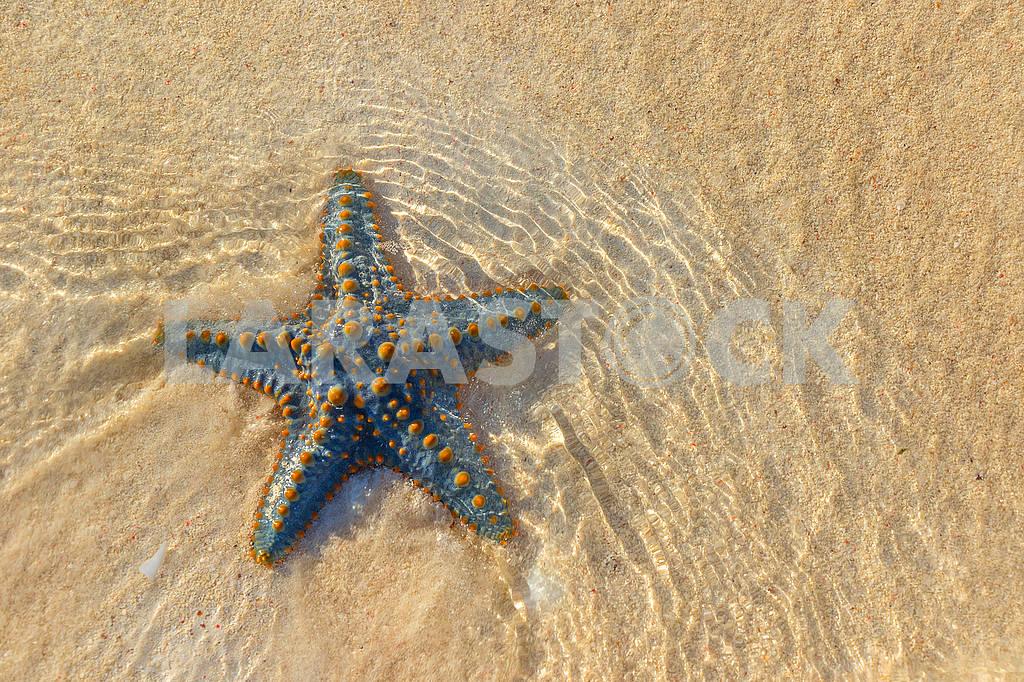 Starfish — Image 65776