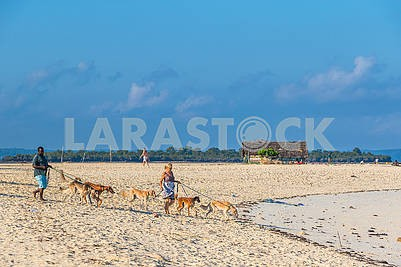 People with dogs on the sand