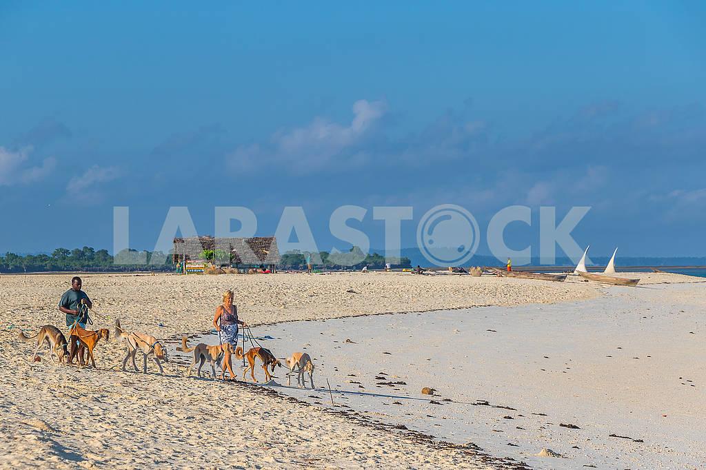 People Walking Dogs — Image 65814