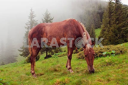 Horses are grazed on a meadow in a fog