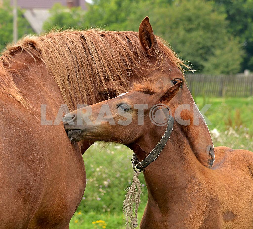 Horses — Image 65876