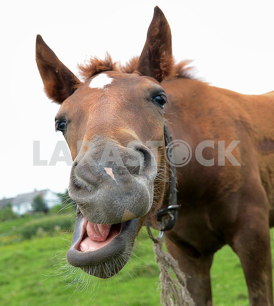 Horse — Image 65877
