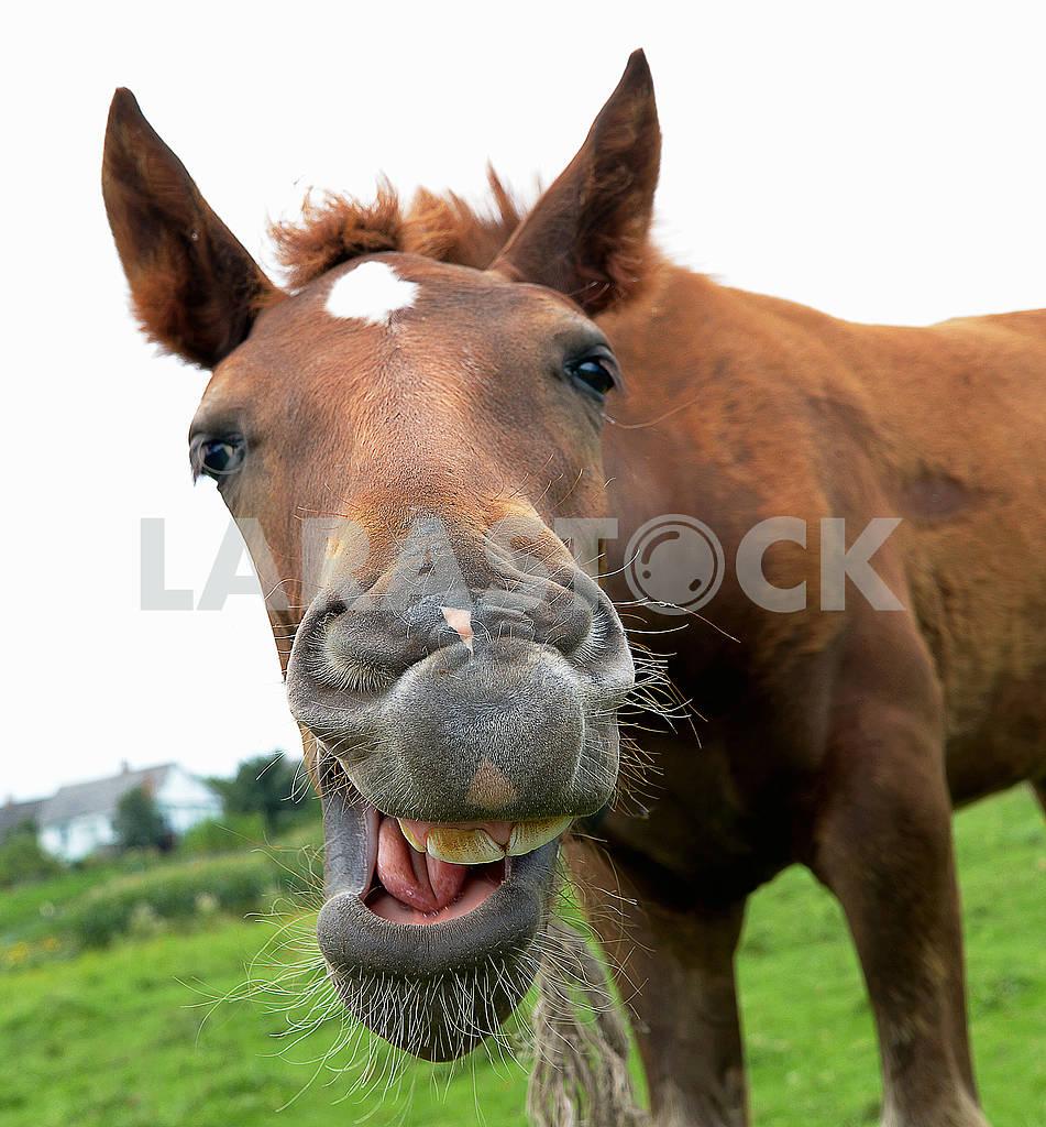 Horse — Image 65882