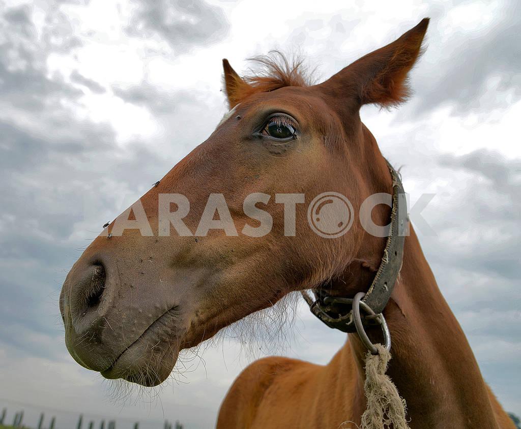 Horse — Image 65883