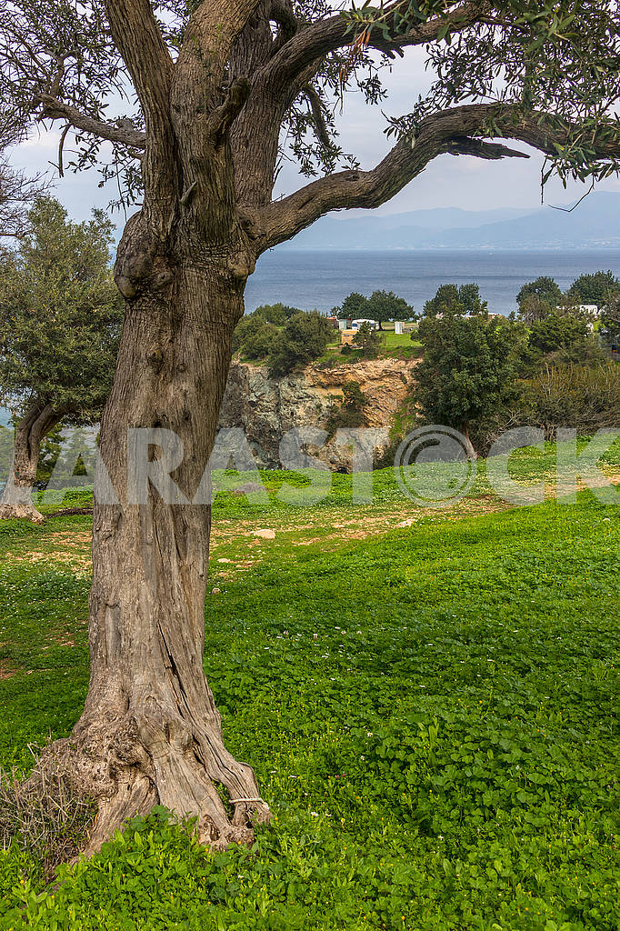Tree of the Akamas Peninsula — Image 66087