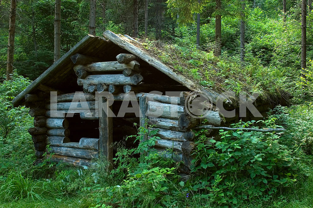 Thrown a log hut in wood — Image 6617