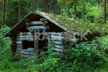 Thrown a log hut in wood
