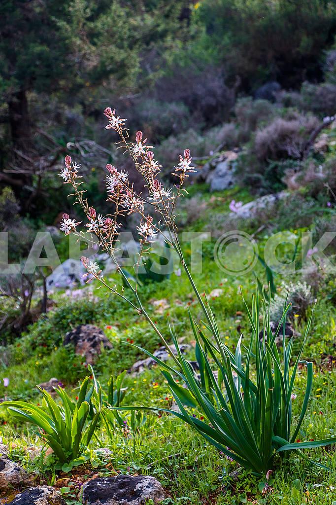 Flowers in Cyprus — Image 66183