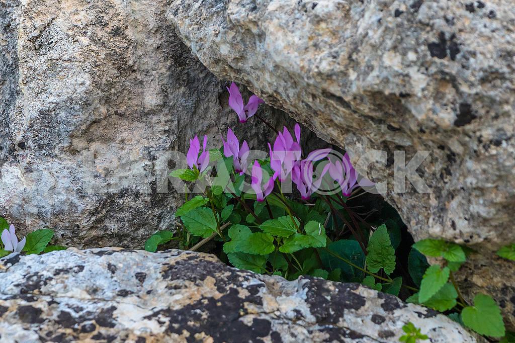 Flowers in Cyprus — Image 66189