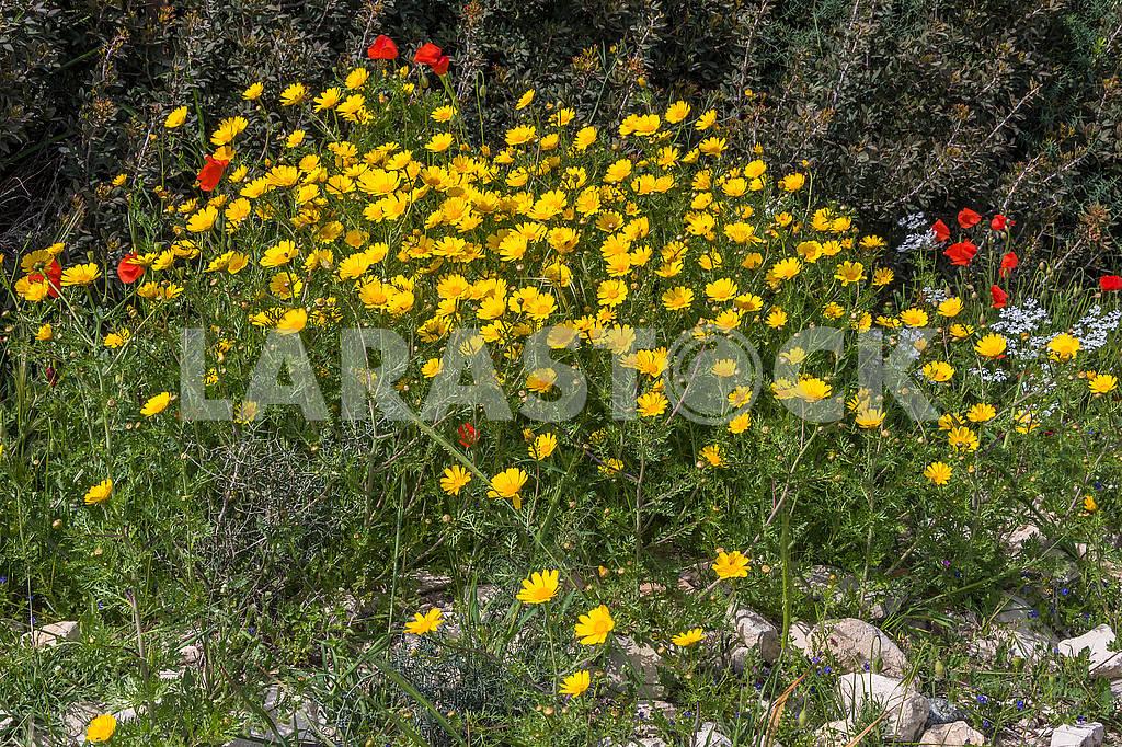 Flowers in Cyprus — Image 66197