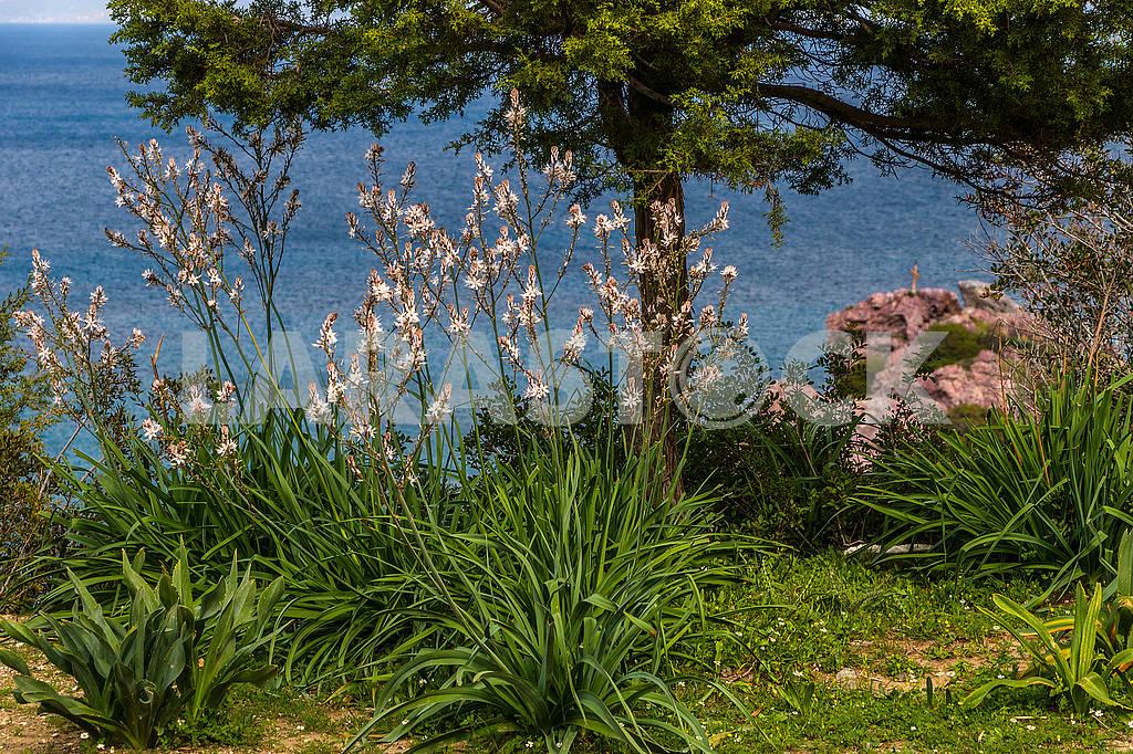 Landscape in Cyprus — Image 66212