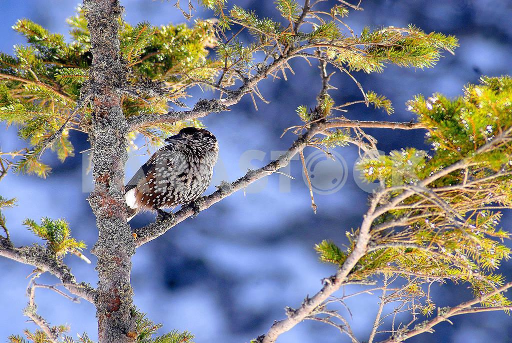 Birdie — Image 66219