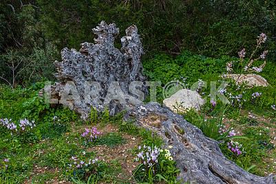 Цветы и поваленное дерево